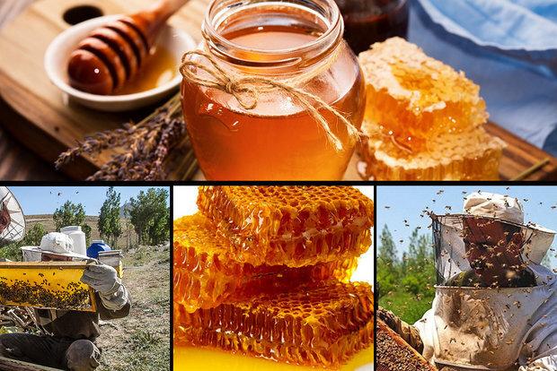 خوی قطب تولید عسل در کشور؛ ضعف در بازاریابی و لزوم برندسازی
