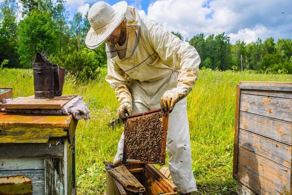 زنبورداران طالقانی از تسهیلات کرونا محروم ماندند/ لزوم حمایت دولت از واردات «ملکه»