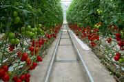۲۰ هکتار گلخانه طی امسال در قم ایجاد میشود