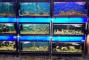 پرورش ماهیان زینتی در قزوینحمایت میشود
