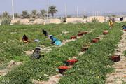 اختصاص آب سدها برای توسعه کشاورزی از بزرگترین اقدامات دولت در میناب است
