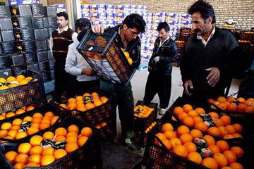 قیمت میوههای شب عید دولتی همچنان بالاتر از کف بازار