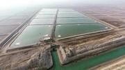 میزان تولید میگوی بوشهر به ۵۶ هزار تن افزایش مییابد