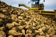 افزایش ۵۰ درصدی قیمت خرید چغندر از کشاورزان آذربایجان غربی