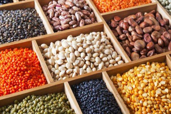 تخصیص ارز نیمایی قیمت حبوبات را افزایش داد؛ عدم امکان برداشت مکانیزه و بیانگیزگی کشاورزان