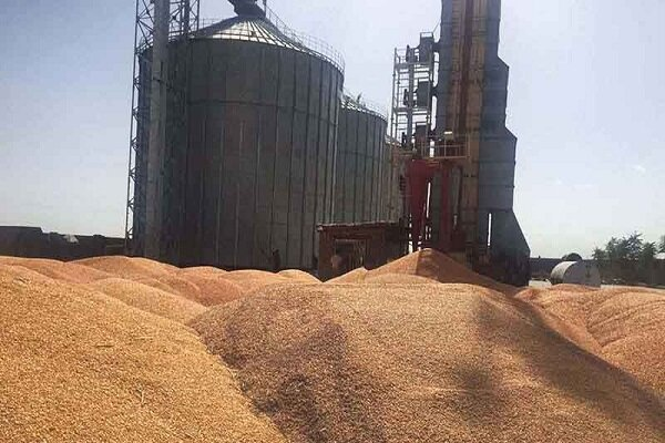 ۲ مرکز جدید خرید گندم در اسدآباد ایجاد می شود