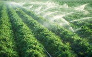 ۱۷۰ هزار هکتار شبکه آبیاری در مازندران درحال اجرا است