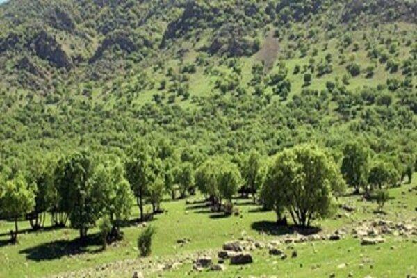 فرجام خواهی برای خروج جنگل هیرکانی آق مشهد از وقف