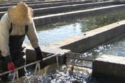 سالانه یک هزار و ۵۰۰ تن ماهی قزلآلا در کرمان تولید میشود