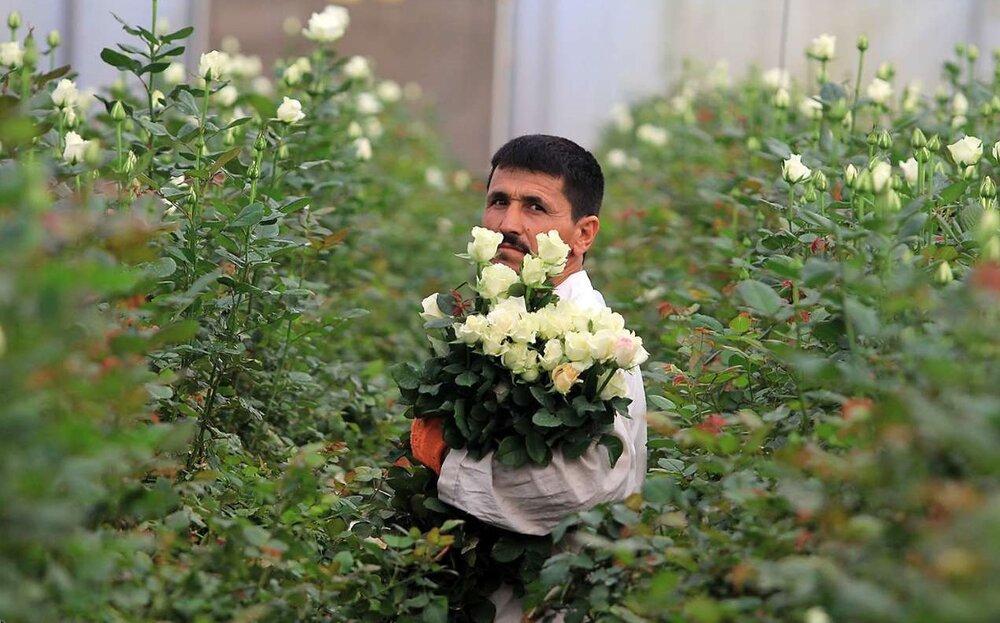 مشکلات تمام نشدنی گلفروشیها؛ کرونا روی گلها نشست