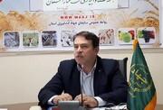 پیش بینی برداشت ۸۰۰۰ تن محصول کلزا از مزارع آذربایجان غربی