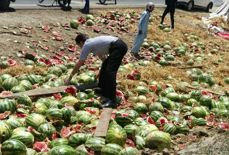 امحای هندوانههای ایرانی در ترکیه با هزینه تجار ایرانی!