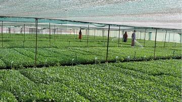 افزایش کشت محصولات کشاورزی در گلخانه