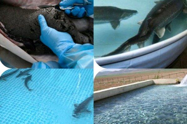 مروارید سیاه زینت سرزمین آبهای روان/ فسیل های زنده به کمک اقتصاد می آیند