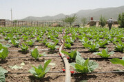 افزایش اراضی آبی استان ایلام به ۱۶۰ هزار هکتار تا پایان دولت