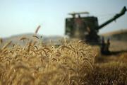 ۲۲۰ هزار تن گندم از کشاورزان قزوینی خریداری میشود