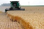 ۱۹ هزار میلیارد ریال گندم  در کردستان خریداری شد