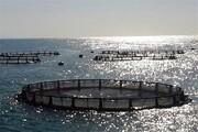 پرورش ماهی درقفس با فناوریهای نو در گیلان گسترش یابد