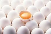 عرضه تخممرغ به تقاضا رسید؛ دان مرغ عامل بینظمی در بازار