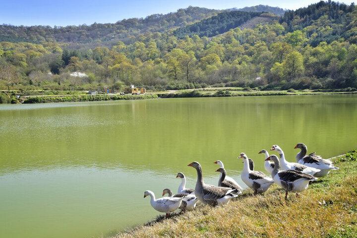 ۱۴۰ قطعه آب بندان در مازندران مرمت شد