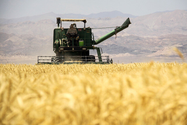 ۱۵۲ هزار تن گندم از کشاورزان قزوین خریداری شد