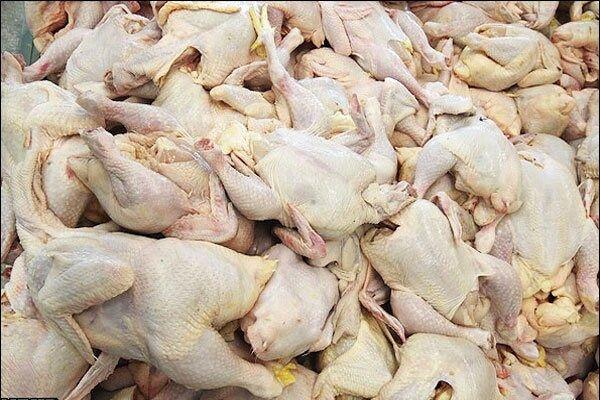 کاهش تولید در کرمان مرغ را گران کرد/ توزیع مرغ منجمد ۱۳ هزار و ۵۰۰ تومانی