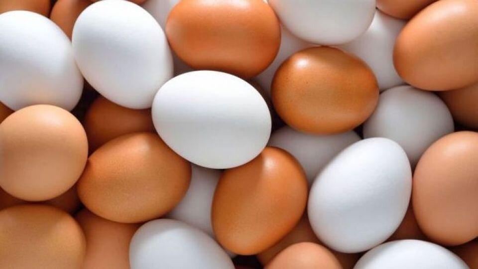 افزایش قیمت تخم مرغ ناشی از چالش تامین نهادهها