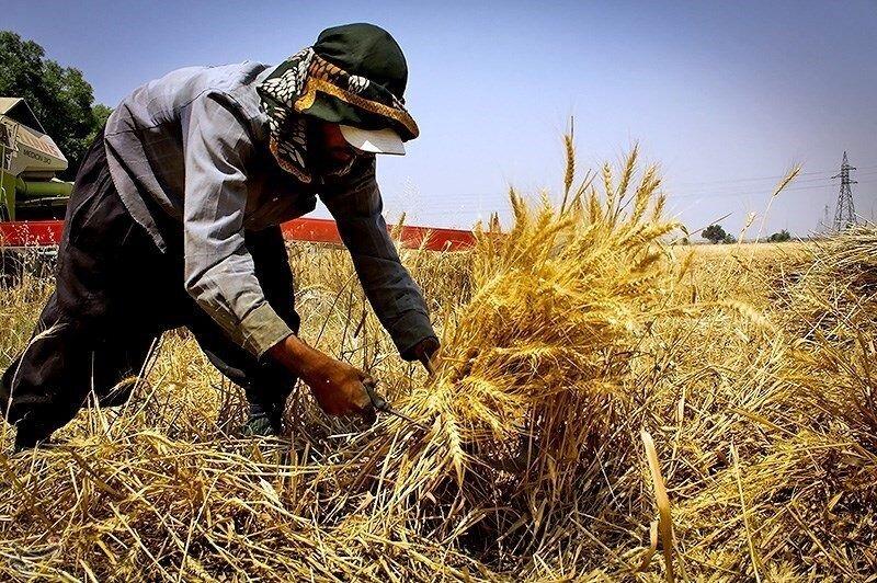 ۱۳ هزار تن گندم از کشاورزان خراسان جنوبی خریداری شد