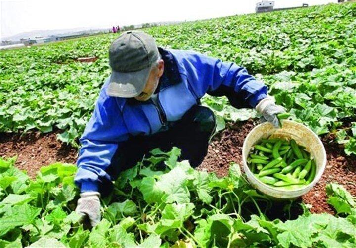 تولیدات کشاورزی امسال به ۱۳۰ میلیون تن میرسد