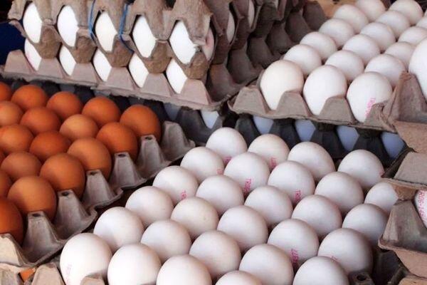کاهش هزار و ۵۰۰ تومانی هر کیلو تخم مرغ