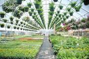 اشتغالزایی برای ۹۱۰ نفر با توسعه گلخانه ها در کهگیلویه و بویراحمد