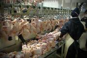 ۳۰۰ تن مرغ منجمد در سطح استان سمنان توزیع شد