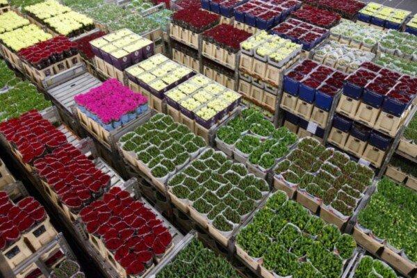 راه اندازی هایپر مارکت گیاهان دارویی در خراسان رضوی