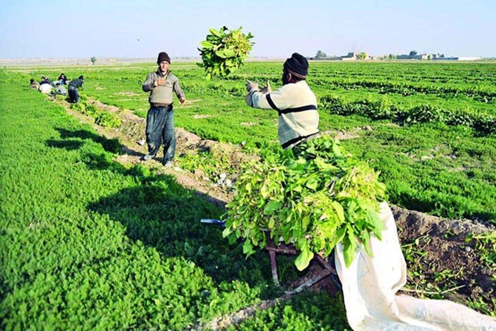 کشاورزی یزد گرفتار در اقلیم خشک؛ فعالیت دامپروری تحت تاثیر مسائل اقتصادی