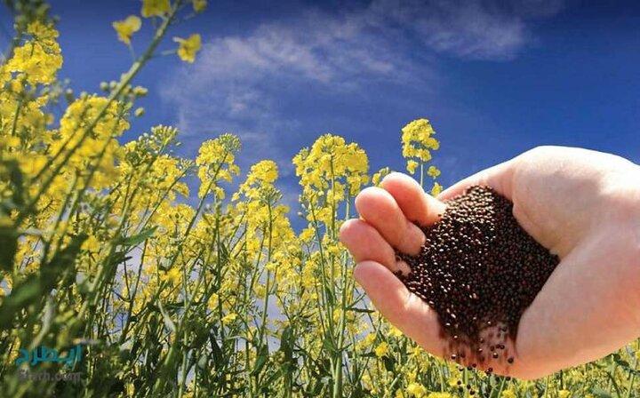 توزیع ۳۰ تن بذر کلزا در آذربایجان شرقی
