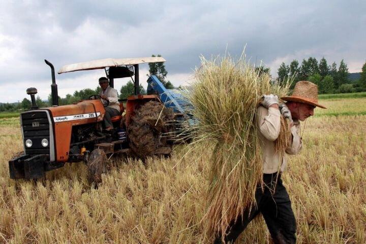 برای جبران هزینه کشاورزان، افزایش خرید تضمینی گندم ضروری است