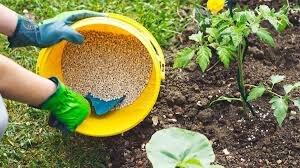 پرورش پایدار گیاهان با استفاده از کودهای ارگانیک شدنی است