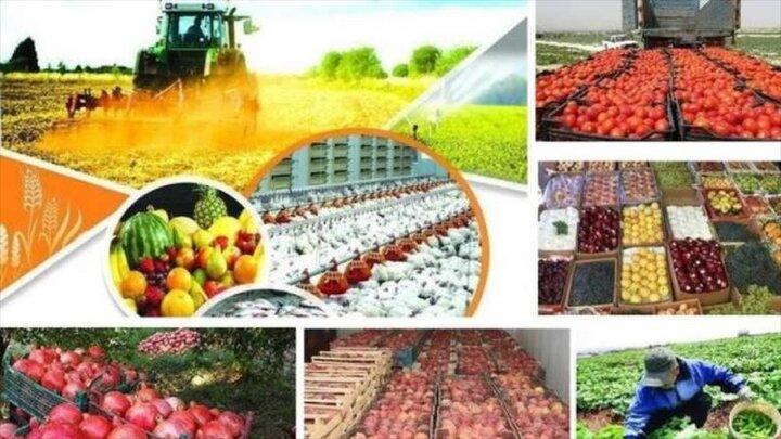 سهم اشتغال زنجان در بخش کشاورزی ۳۳ درصد است