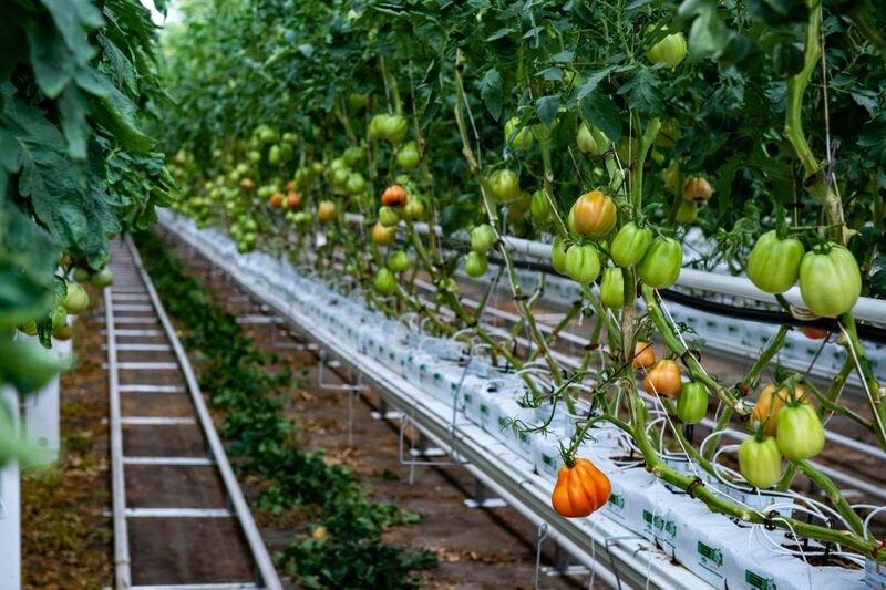 افتتاح بزرگترین گلخانه پشت بامی جهان در کانادا
