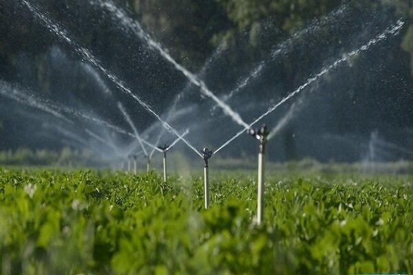 تولید در باغات آبی ۱۰ برابر دیم/ ۳۲ هزار هکتار از باغات کردستان آبی است