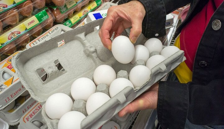 قیمت تخم مرغ پر کشید؛ افزایش قیمت نهاده و کاهش عرضه، بهانه گرانی