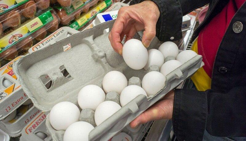 قیمتگذاری شانهای تخم مرغ صحیح نیست