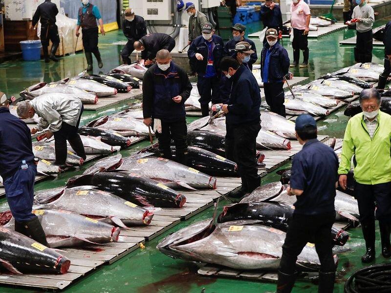 بازار ماهی تن در توکیو
