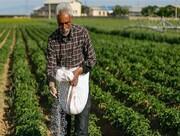 افزایش قیمت کود کشاورزان را با مشکل مواجه کرده است