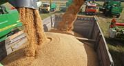 ۲۱۱ هزار تن گندم در قزوین خریداری شد