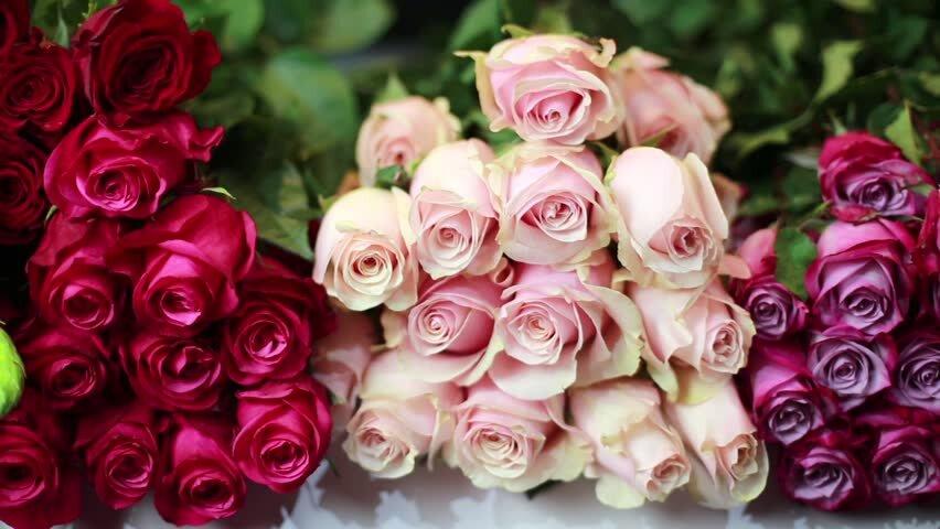 فروش اینترنتی گل و گیاه رونق گرفت