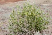 ۱۴ گونه گیاهی یزد در معرض انقراض قرار دارد؛ لزوم حمایت سرمایهگذاران