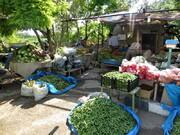 باغ های صیفی و سبزی تبریز ظرفیت بوم گردی دارند